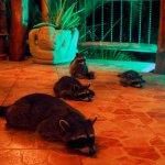 Les visiteurs du souper...