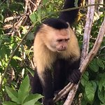 Capuchin Monkeys, so named b/c they resemble Capuchin Monks!