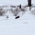 Hello Mr. Moose!