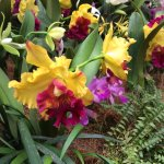 Photo of National Orchid Garden