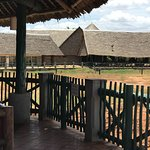 Photo of Voi Wildlife Lodge