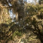 Overarching trees make beautiful drive
