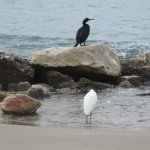 Birds at Poniente beach