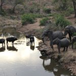 Photo of Lukimbi Safari Lodge