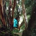 """Hermoso contraste de bosque de arrayanes color canela con el verde del lugar"""""""
