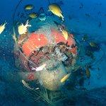 plenty of marine life