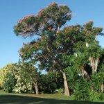 Foto de Barbados Golf Club
