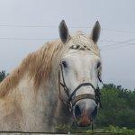 Bilde fra Outeniqua Moon Percheron Stud and Guest Farm