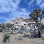 Joshua Tree National Park Foto