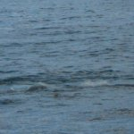 Sea turtle sighting