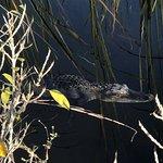 Capt Mitch's - Everglades Private Airboat Tours Foto