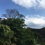 Photo of La Ceiba Tree Lodge
