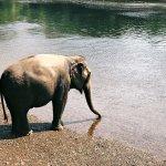 ElephantsWorld Foto