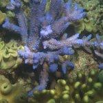 Seastar Cruises Reef Day Trip