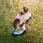 Unawatuna Diving Centre Foto