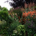 Just a small patch of a wonderful garden
