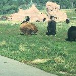 Bear Country USA Foto