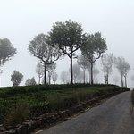 Dambatenne Tea Factory Walk Back to Haputale