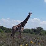 Nairobi Game Drive