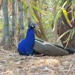Photo de Trident Udaipur