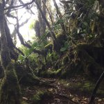 Photo de Mossy Forest