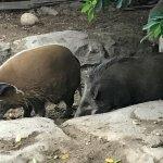 Photo de Cango Wildlife Ranch