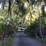 coconuts corridor