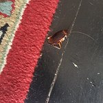 Squashed cockroach on the floor of Room 2042