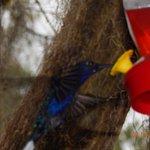 Talamanca Reserve Foto
