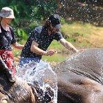 Elephant Riding Woodys Chiang Mai