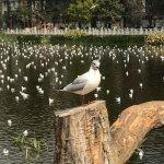 Green Lake (Cui Hu) Foto