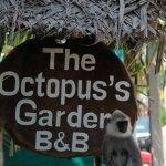 Octopus Garden House Foto