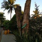 Decoração externa em parte de tronco de árvore