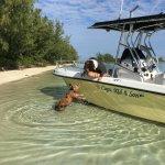 Pig at the boat