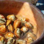 The mollusks brought for pearls etc.