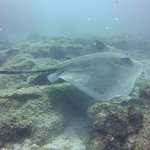 the huge stingray :)
