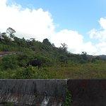 Photo de Route de la Trace