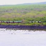 Photo of Floreana Lava Lodge
