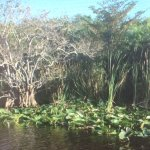 Everglades Holiday Park Foto