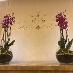 Gorgeous Orchids in the lobby