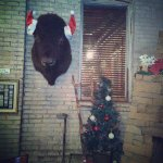 This was back at Christmas but the buffalo is always there.