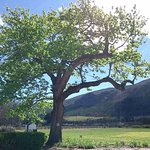 Photo of Basse Provence