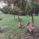breakfast zoo