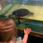 Our visit to the sea life nature center was informational and unforgettable