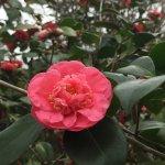 Bayou Bend Collection and Gardens Photo