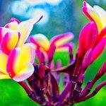 Another stunning flower.