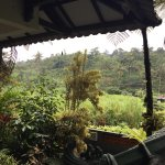 Het guesthouse ligt net buiten Bogor aan de rand van een stromende rivier.