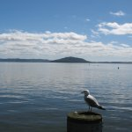Makoia island, lake Rotorua