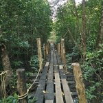 Private jetty into the Mangroves