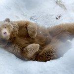 Photo de Polar Park